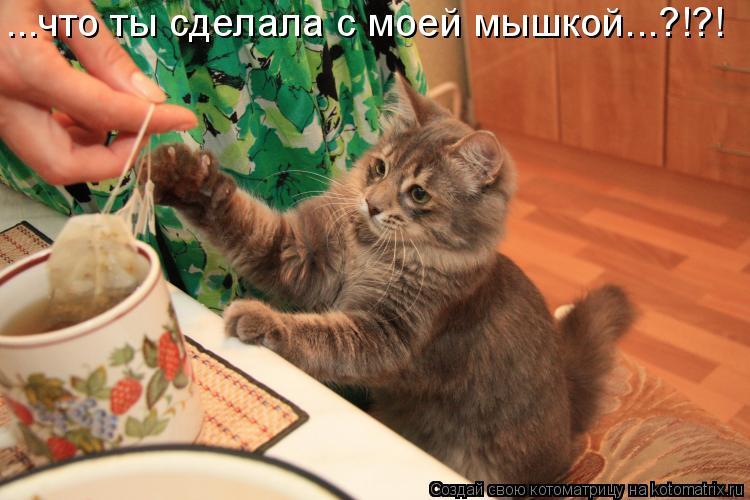 Котоматрица: ...что ты сделала с моей мышкой...?!?!
