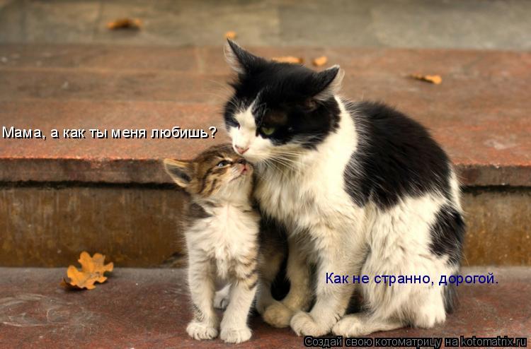 Котоматрица: Мама, а как ты меня любишь? Как не странно, дорогой.