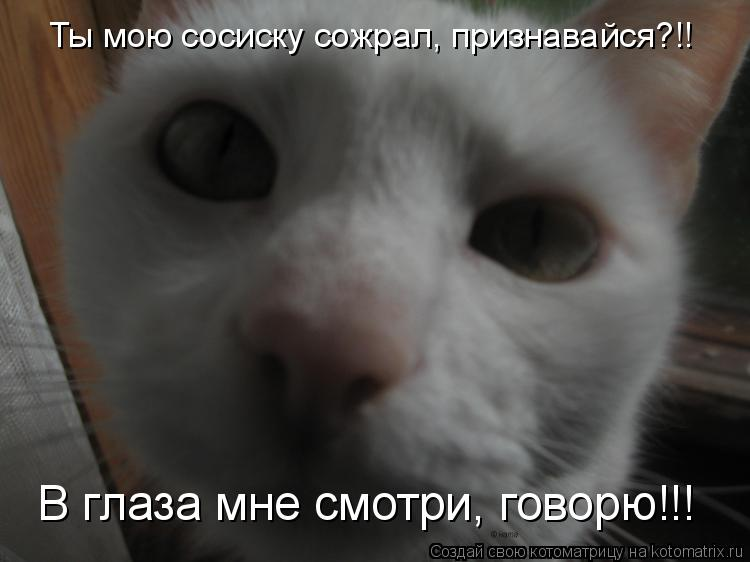 Котоматрица: Ты мою сосиску сожрал, признавайся?!! В глаза мне смотри, говорю!!!