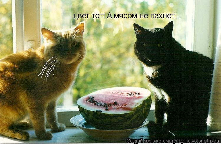 Котоматрица: цвет тот! A мясом не пахнет...
