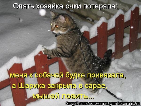 Котоматрица: Опять хозяйка очки потеряла: меня к собачей будке привязала, мышей ловить... а Шарика закрыла в сарае,