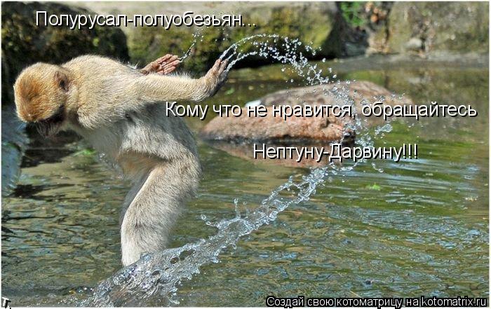 Котоматрица: Полурусал-полуобезьян... Кому что не нравится, обращайтесь Нептуну-Дарвину!!!