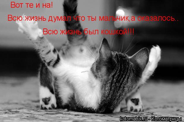 Котоматрица: Вот те и на! Всю жизнь думал что ты мальчик,а оказалось.. Всю жизнь был кошкой!!!