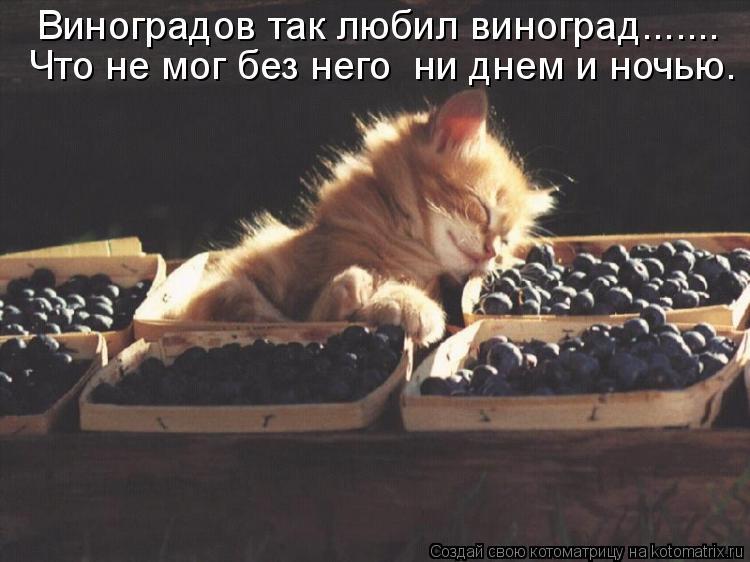 Котоматрица: Виноградов так любил виноград....... Что не мог без него  ни днем и ночью.
