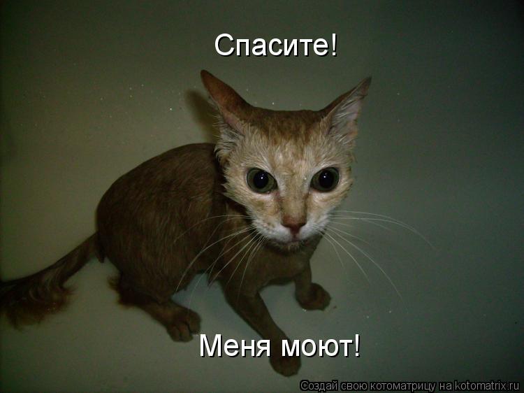 Котоматрица: Спасите! Меня моют!