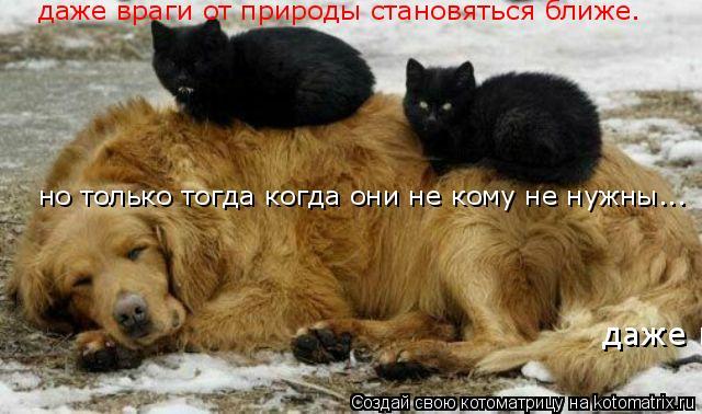 Котоматрица: даже враги от природы становяться ближе. но только тогда когда они не кому не нужны... даже враги от природы становяться ближе. но только тог
