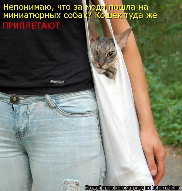 Котоматрица: Непонимаю, что за мода пошла на миниатюрных собак? Кошек туда же  ПРИПЛЕТАЮТ