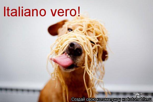Котоматрица: Italiano vero!