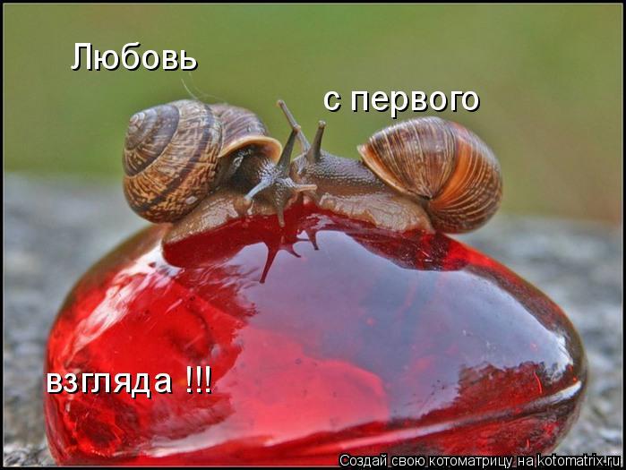 Котоматрица: Любовь с первого взгляда !!!