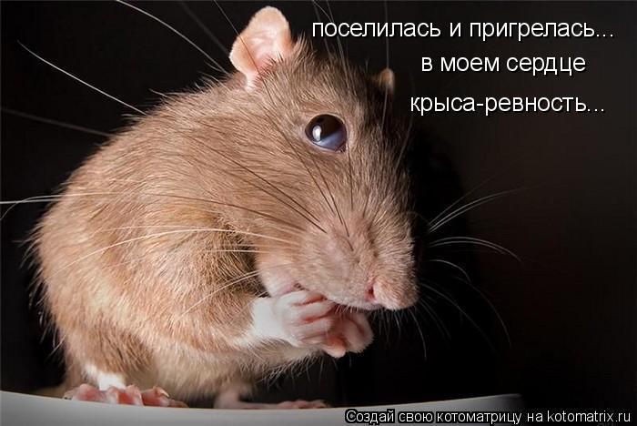 Котоматрица: поселилась и пригрелась... в моем сердце  крыса-ревность...
