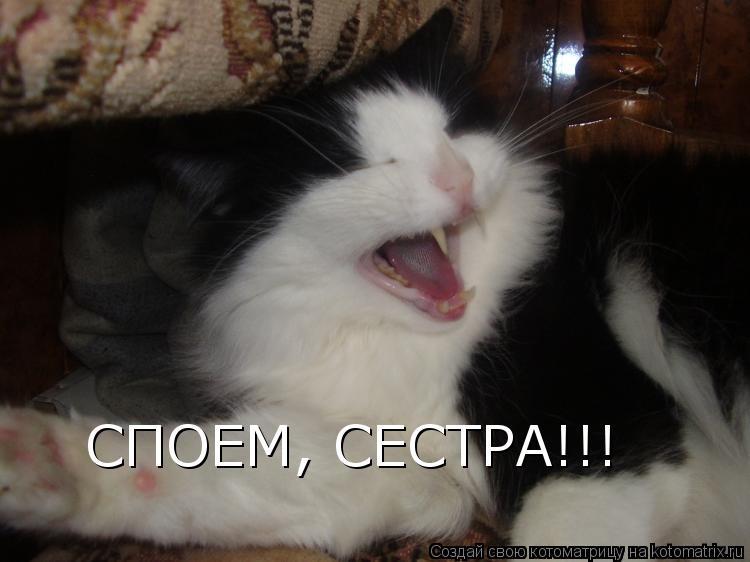 Котоматрица: СПОЕМ, СЕСТРА!!!