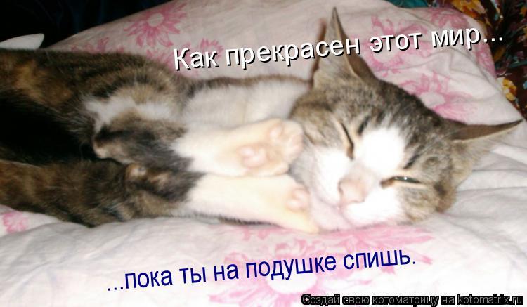 Котоматрица: ...пока ты на подушке спишь. Как прекрасен этот мир...