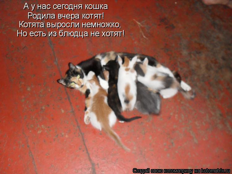 Котоматрица: А у нас сегодня кошка Родила вчера котят! Котята выросли немножко, Но есть из блюдца не хотят!