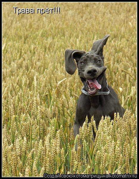 Котоматрица: Трава прёт!!!