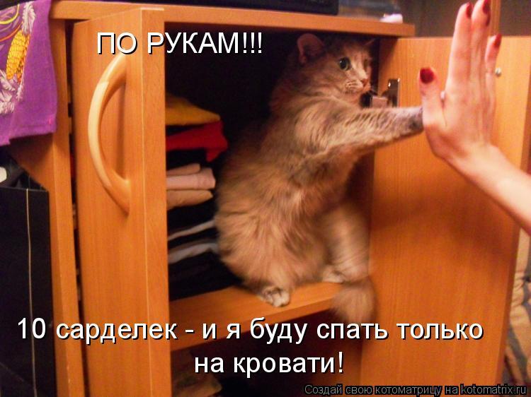 Котоматрица: ПО РУКАМ!!! 10 сарделек - и я буду спать только на кровати!