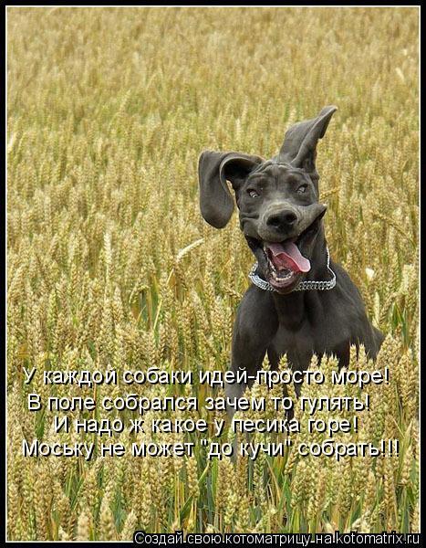 """Котоматрица: У каждой собаки идей-просто море! В поле собрался зачем то гулять! И надо ж какое у песика горе! Моську не может """"до кучи"""" собрать!!!"""