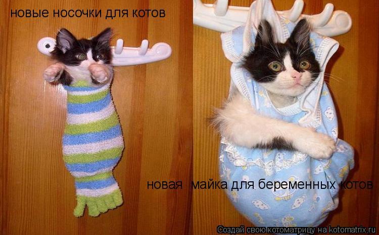 Котоматрица: новые носочки для котов новая  майка для беременных котов