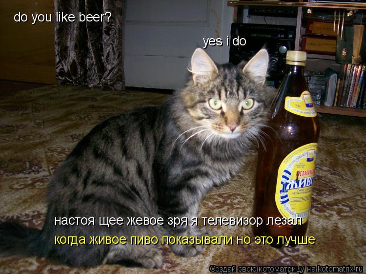 Котоматрица: do you like beer? yes i do настоя щее жевое зря я телевизор лезал когда живое пиво показывали но это лучше