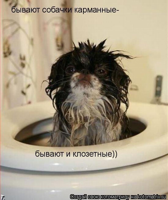 Котоматрица: бывают собачки карманные- бывают и клозетные))