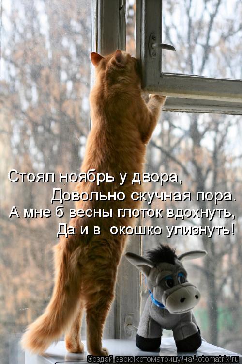 Котоматрица: Стоял ноябрь у двора, Довольно скучная пора. А мне б весны глоток вдохнуть, Да и в  окошко улизнуть!