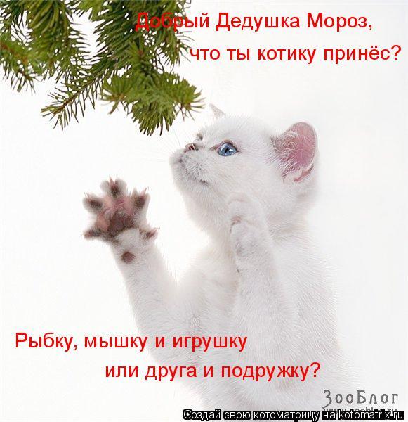 Котоматрица: Добрый Дедушка Мороз, что ты котику принёс? Рыбку, мышку и игрушку или друга и подружку?