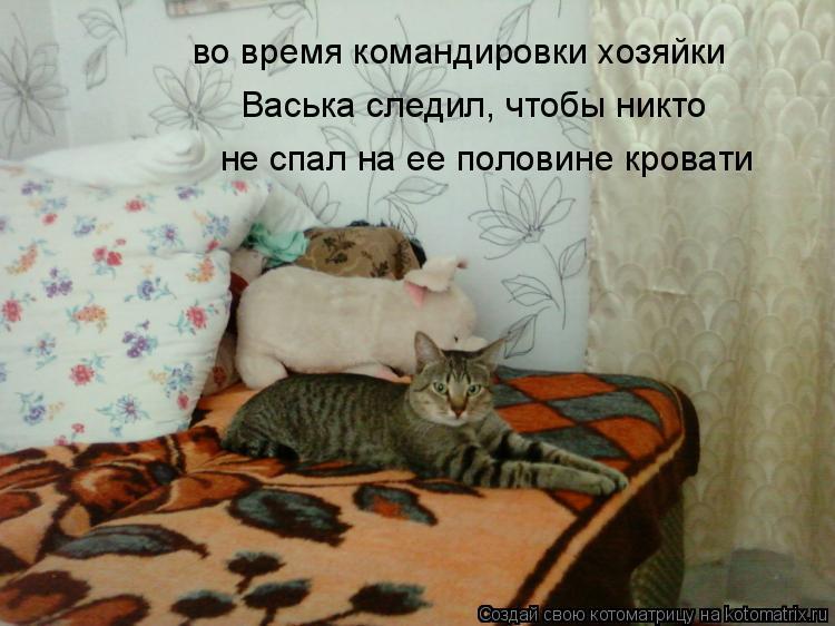 Котоматрица: во время командировки хозяйки Васька следил, чтобы никто не спал на ее половине кровати