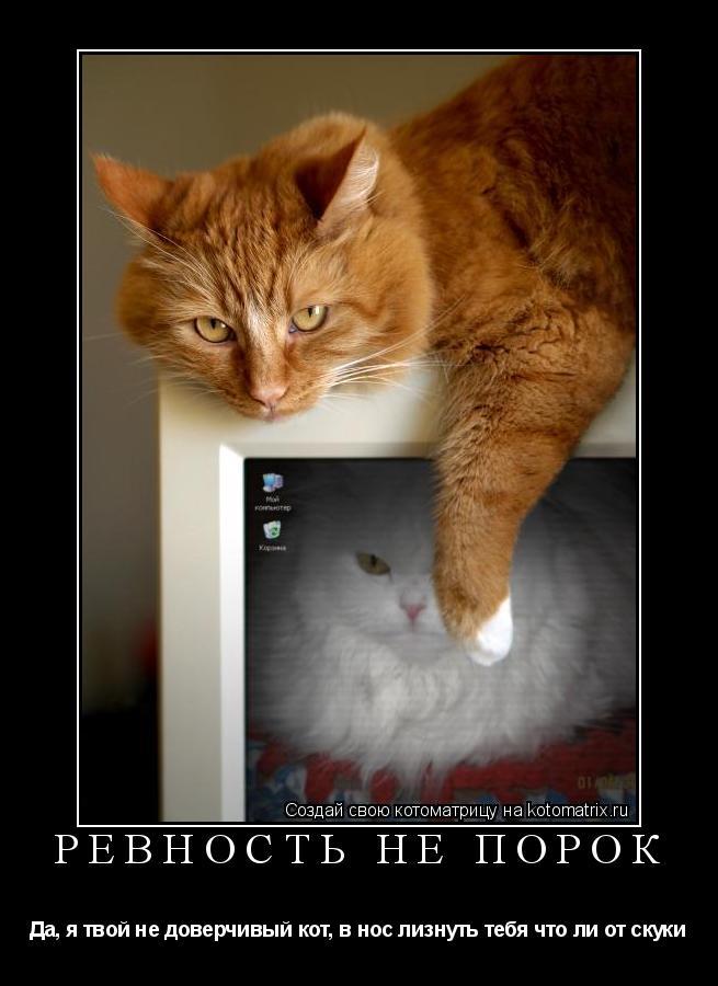 Котоматрица: Ревность не порок Да, я твой не доверчивый кот, в нос лизнуть тебя что ли от скуки