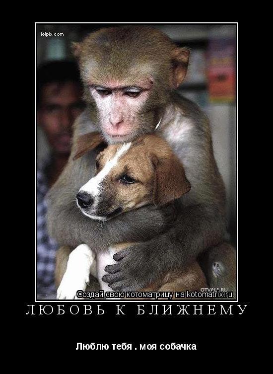 Котоматрица: Любовь к ближнему Люблю тебя . моя собачка