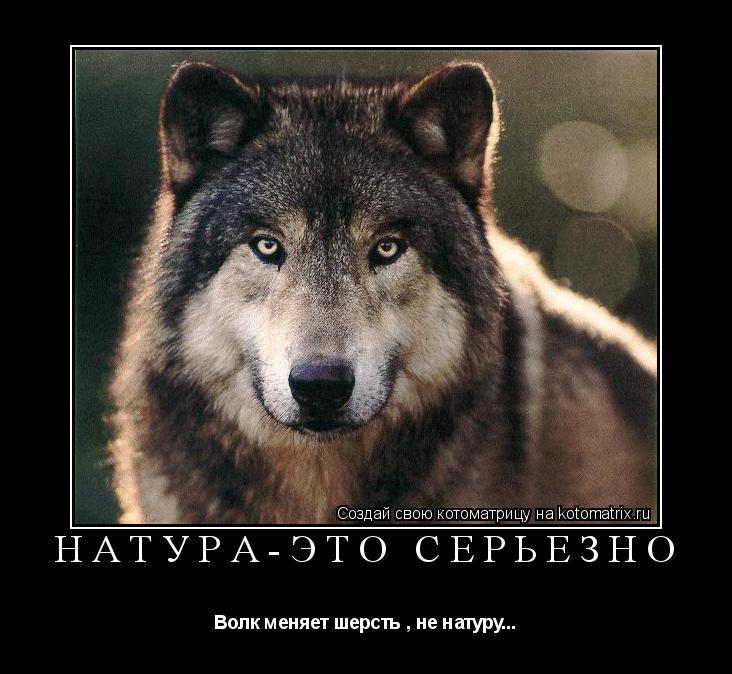 Котоматрица: Натура-это серьёзно Волк меняет шерсть , не натуру...