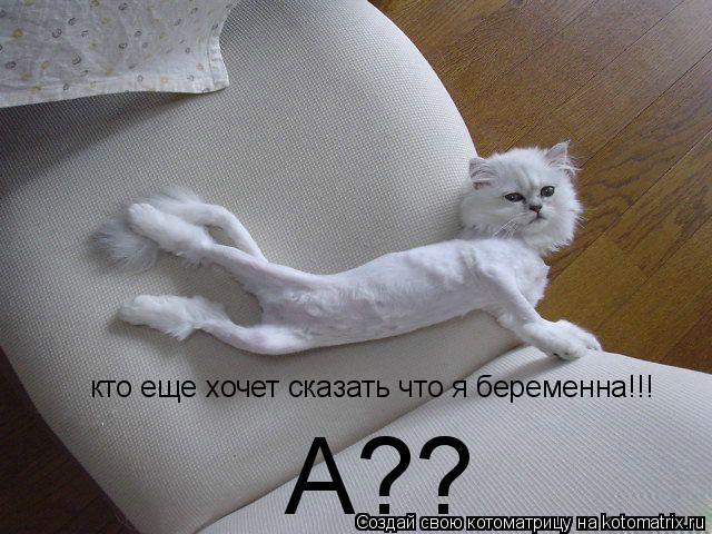 Котоматрица: кто еще хочет сказать что я беременна!!! А??