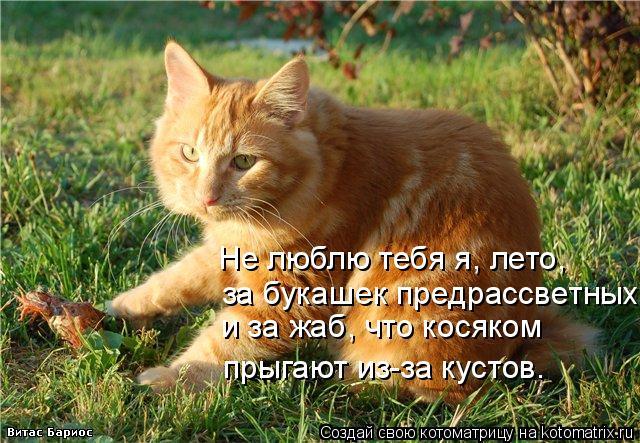 Котоматрица: Не люблю тебя я, лето, и за жаб, что косяком прыгают из-за кустов. за букашек предрассветных