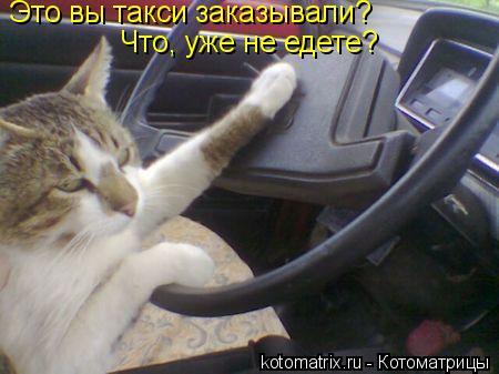 Котоматрица: Это вы такси заказывали? Что, уже не едете?