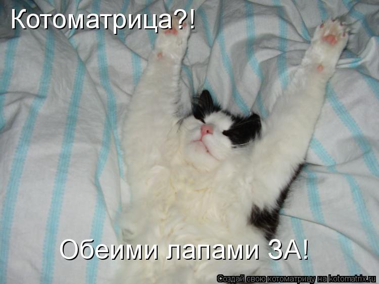 Котоматрица: Обеими лапами ЗА! Котоматрица?!