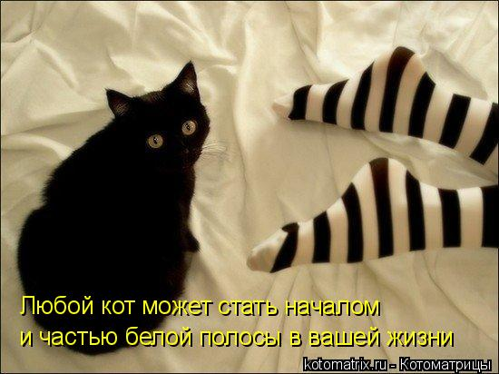 http://kotomatrix.ru/images/lolz/2009/11/21/411201.jpg