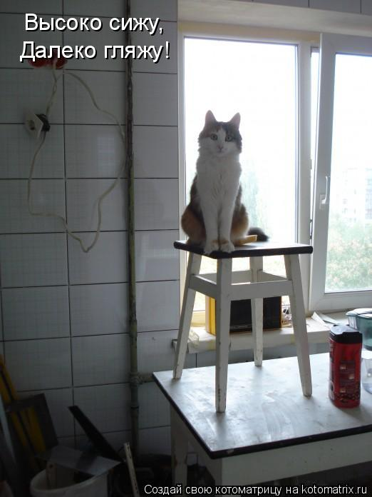 Котоматрица: Высоко сижу Высоко сижу, Далеко гляжу!