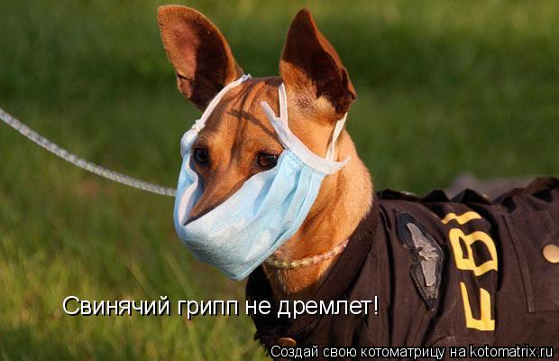 Котоматрица: Свинячий грипп не дремлет!