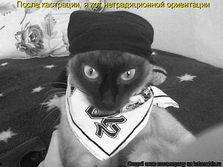 Котоматрица: После кастрации, я кот нетрадиционной ориентации