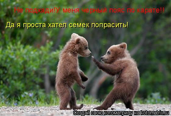 Котоматрица: Не подхади!У меня черный пояс по карате!! Да я проста хател семек попрасить!