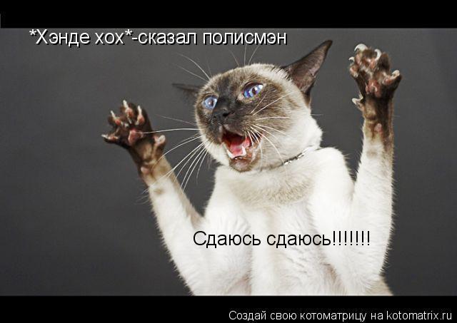 Котоматрица: *Хэнде хох*-сказал полисмэн Сдаюсь сдаюсь!!!!!!!