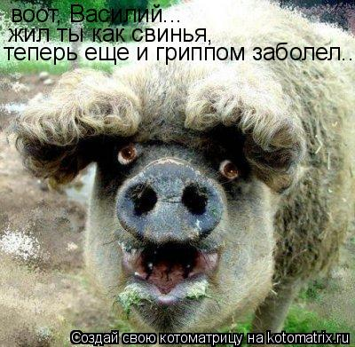 Котоматрица: воот, Василий... жил ты как свинья, теперь еще и гриппом заболел...