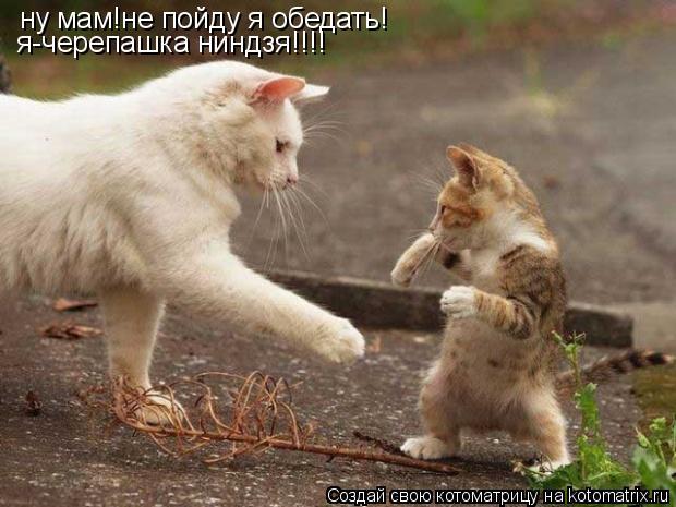 Котоматрица: ну мам!не пойду я обедать! я-черепашка ниндзя!!!!