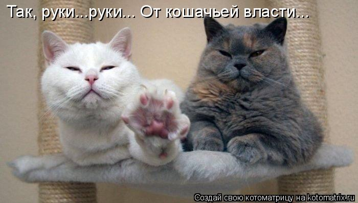 Котоматрица: Так, руки...руки... От кошачьей власти...