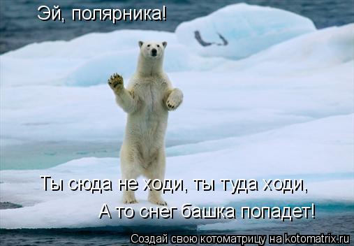 Котоматрица: Эй, полярника! Ты сюда не ходи, ты туда ходи, А то снег башка попадет!
