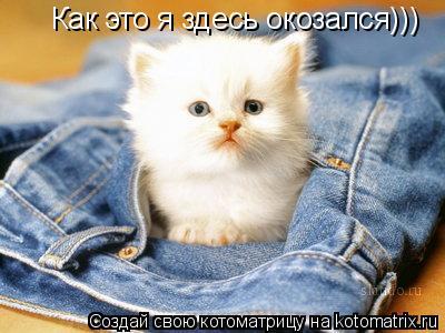 Котоматрица: Как это я здесь окозался)))