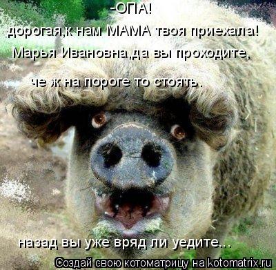 Котоматрица: Марья Ивановна,да вы проходите, че ж на пороге то стоять. назад вы уже вряд ли уедите... -ОПА! дорогая,к нам МАМА твоя приехала!
