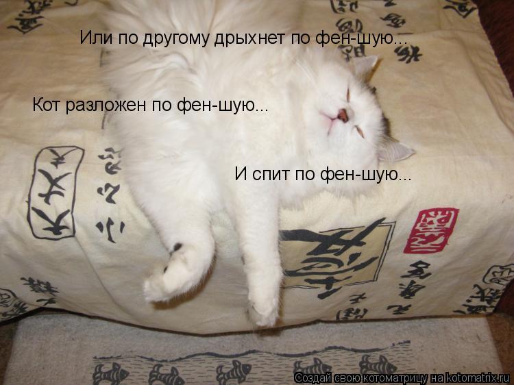 Котоматрица: Кот разложен по фен-шую... И спит по фен-шую... Или по другому дрыхнет по фен-шую...