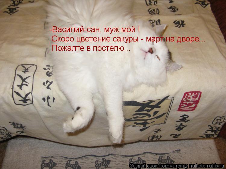 Котоматрица: -Василий-сан, муж мой ! Скоро цветение сакуры - март на дворе... Пожалте в постелю...