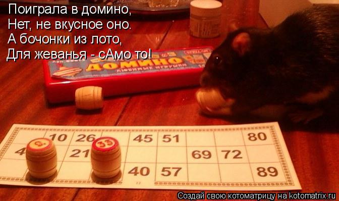 Котоматрица: Поиграла в домино, Нет, не вкусное оно. А бочонки из лото, Для жеванья - сАмо то!
