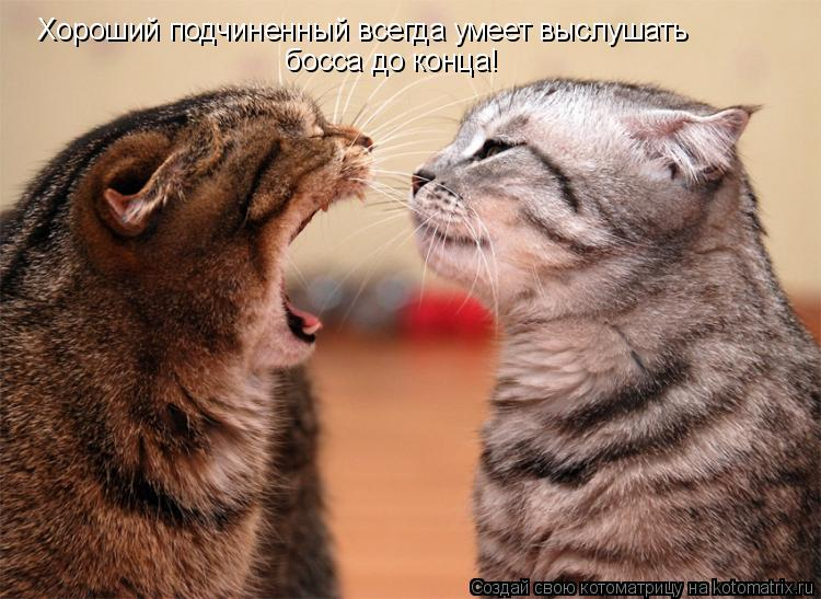 Котоматрица: Хороший подчиненный всегда умеет выслушать  босса до конца!