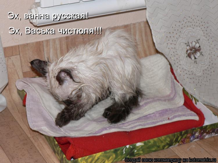 Котоматрица: Эх, ванна русская! Эх, Васька чистюля!!!